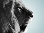 ライオン_採用スローガン&採用HPの画像